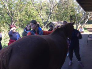kurz krmení koní