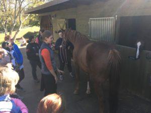 workshop krmení koní