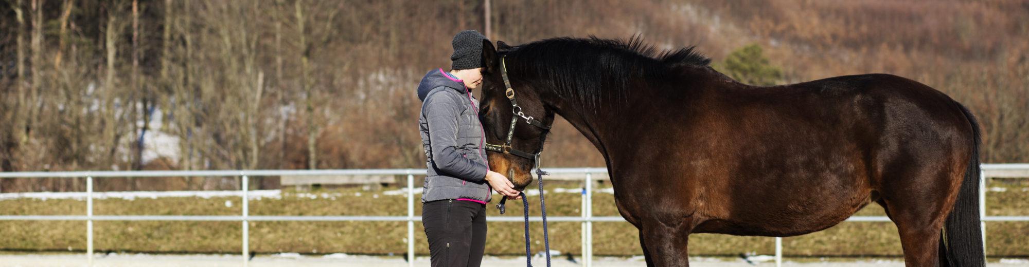 Krmení koní – poradenství ve výživě koní